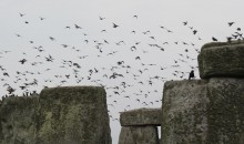 The flock of young starlings